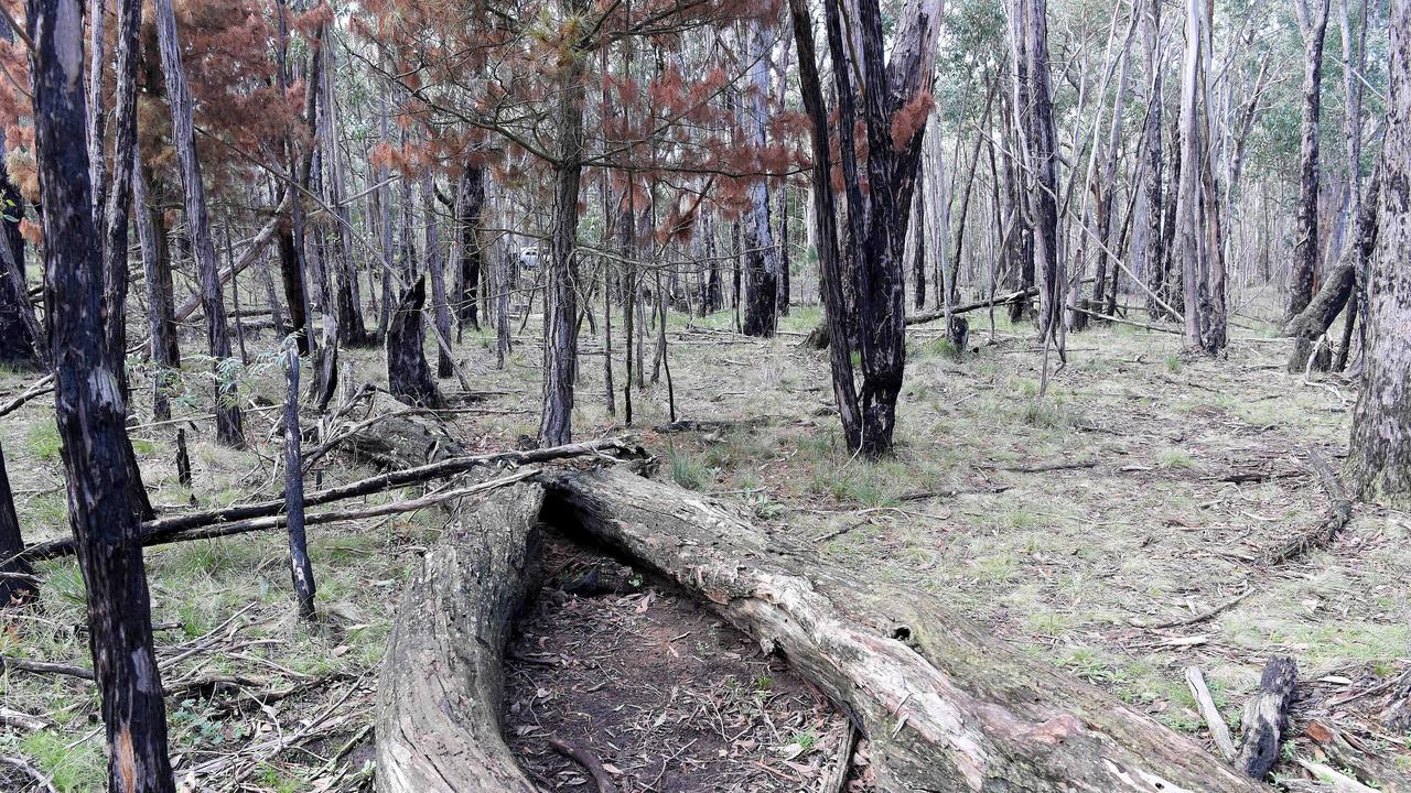 The site where Karen Ristevski's body was found at Mount Macedon. Picture: Nicole Garmston