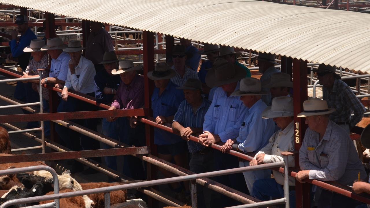 PACKED YARDS: Cattle farmers like Miss Richter head to the yards to sell up their last few head.