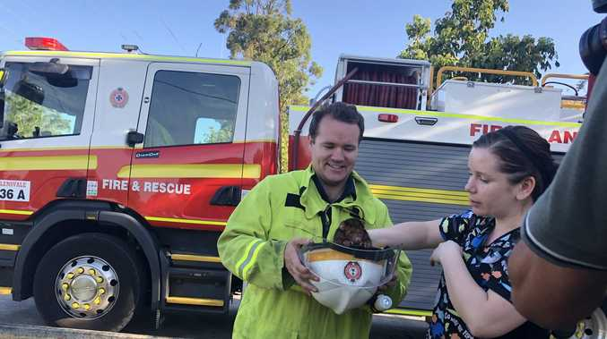 Possum and her baby saved from bushfire