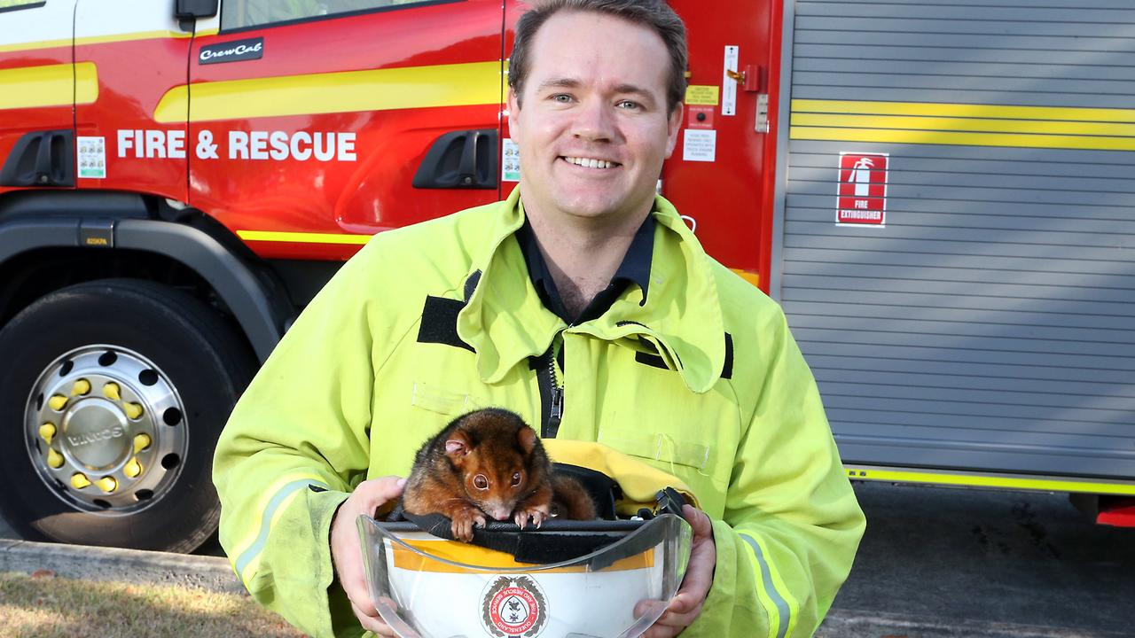 Firefighter Lee Cody discovered an injured ring tail possum in a culvert. It was taken to Koala Park Vets and treated for burns by vet Dr Amy Baleato-Farrow. Photo: AAP Image/Richard Gosling