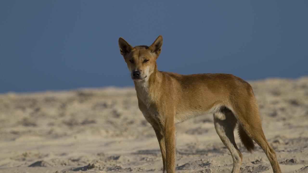 Fraser Island for Sheree and Spida Everitt's travel column