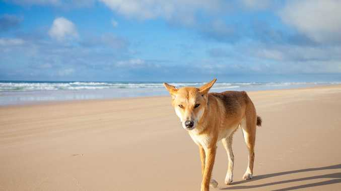 Pushing safety message after dingo attack
