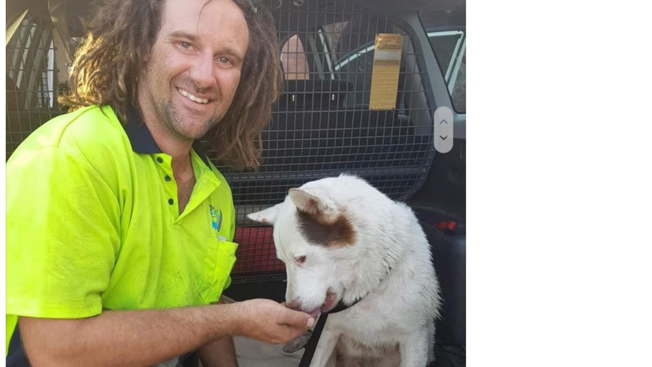 Fonzy the dog was found hiding under a pontoon after his master was stabbed on Friday.