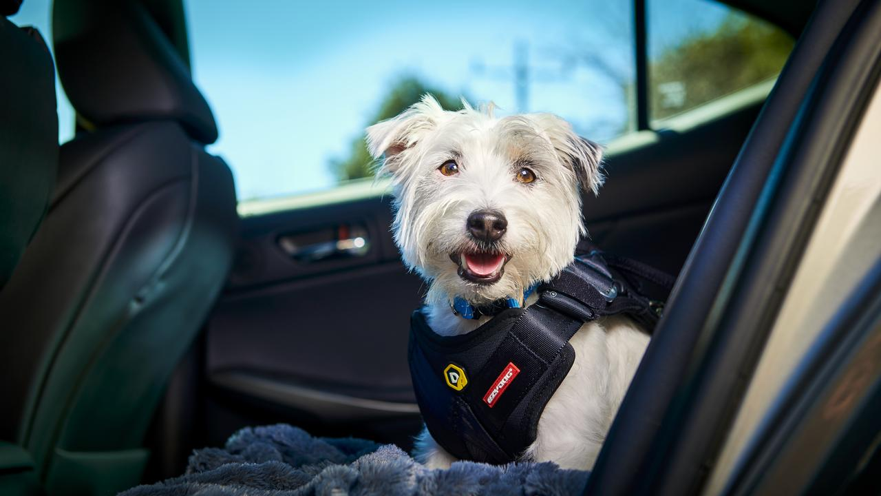 SUMMER LOVIN': Holidays just aren't complete without your furriest friends. PETstock talk to us about ways to ensure they are safe on the road and at the beach these Summer holidays.
