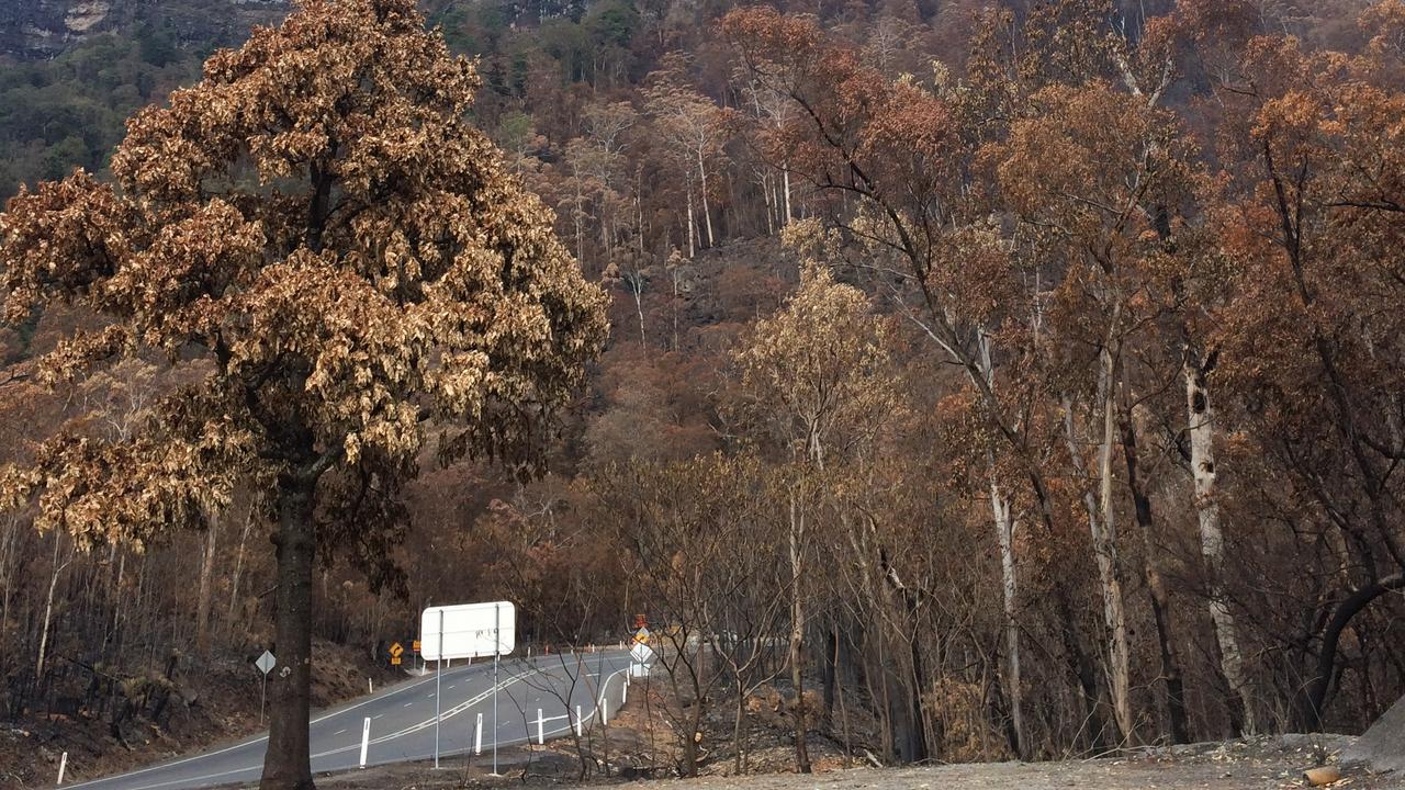 RISK OF FALLEN TREES: Smouldering trees are a key concern for TMR.