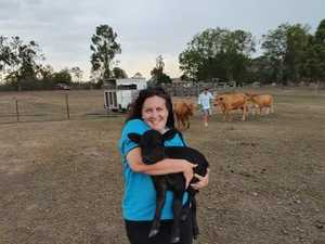 CUTE PHOTOS! Twin calves a glimmer of hope from drought
