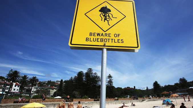 Coast lifeguards brace for summer stinger influx