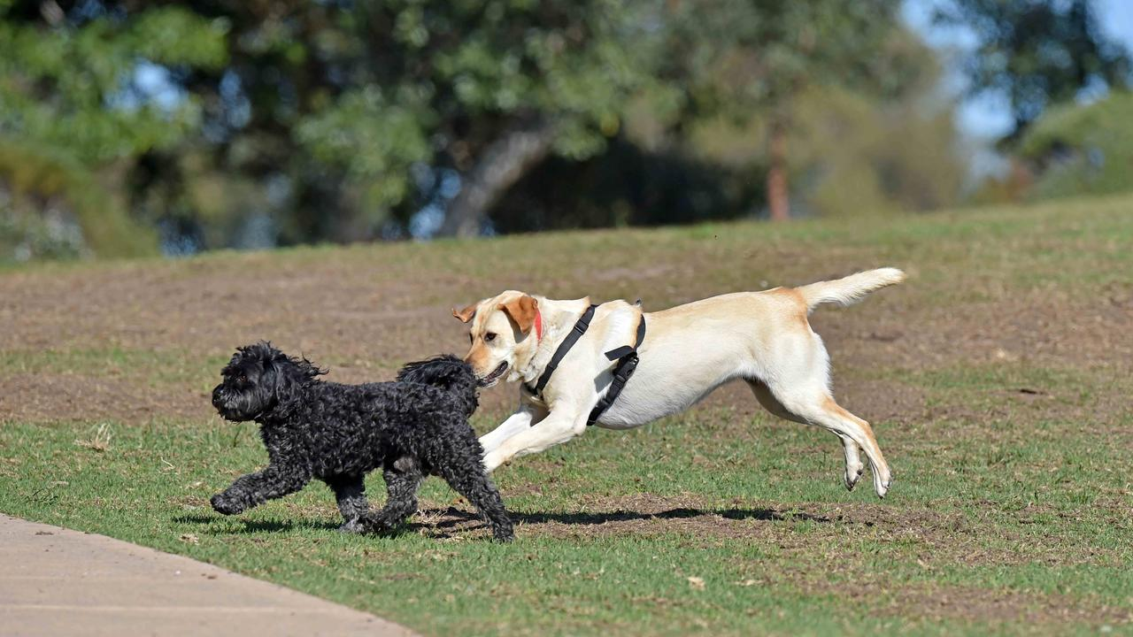 Almost 1500 people have signed a petition to relocate or enclose a dog park where a woman was attacked and near to where a wallaby was mauled to death.