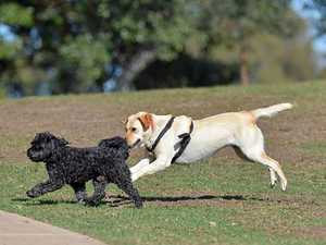 1500 people for a dog park to be moved