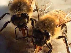 Honey industry seeks help for drought-stricken beekeepers