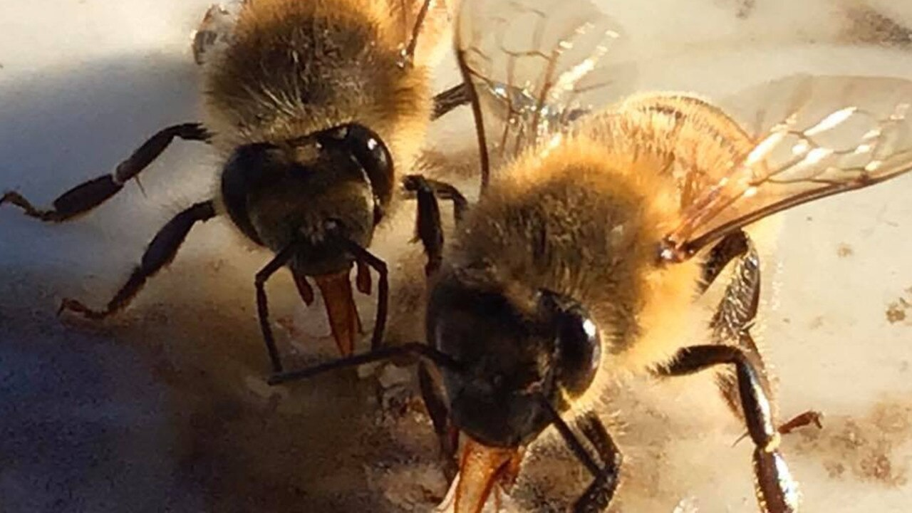The honey industry is rallying to help bee keepers forced to hand feed their bees as drought and bushfire destroy their feed sources