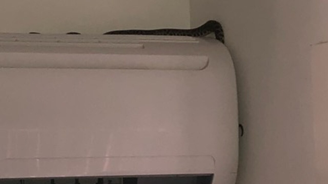 Spotted python sought cooler temps on an air conditioner