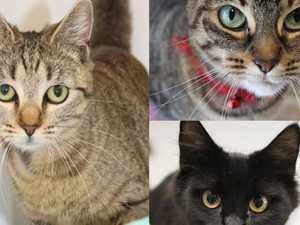 ADOPT: The 10 cats looking for a new home this Christmas