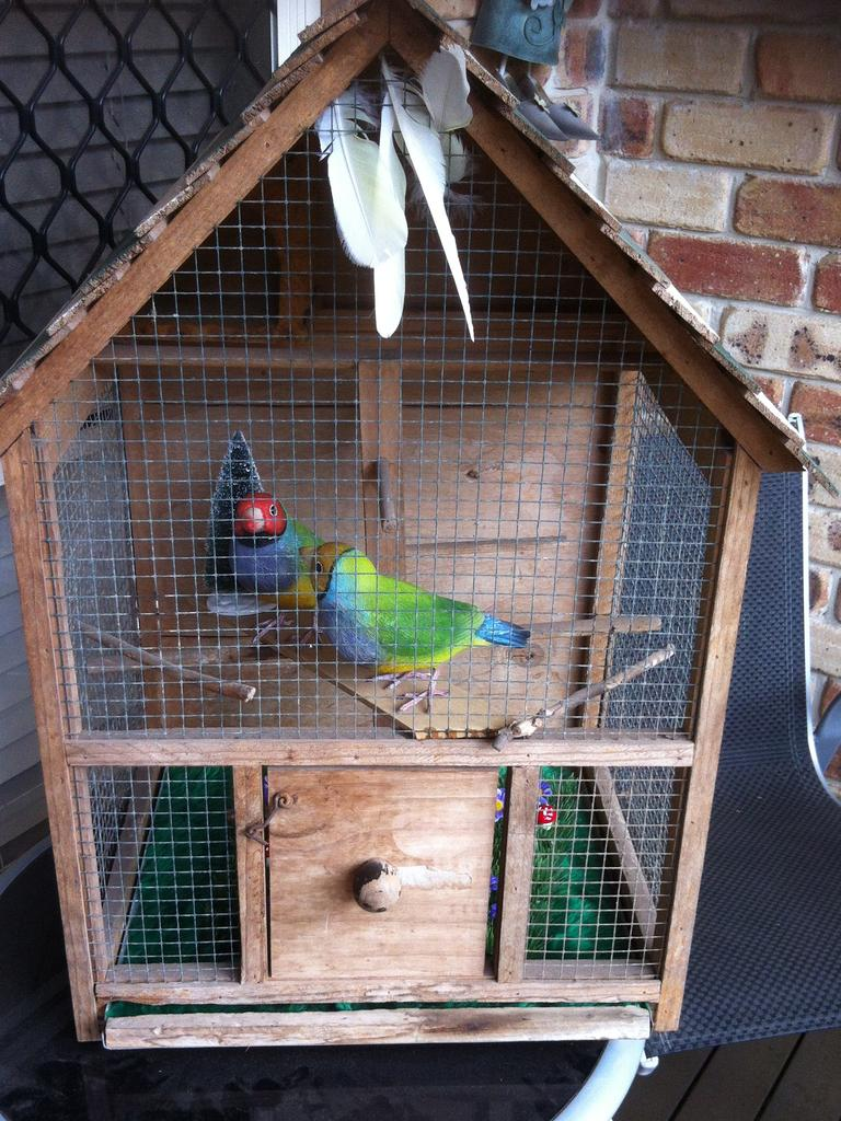 TOO REAL: The handcrafted bird cage with its two wooden occupants.
