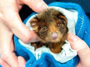 Animal hospital overrun with wildlife during 'trauma' season