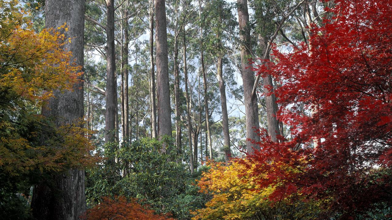 The Blue Mountains Botanic Gardens at Mt Tomah is under threat from the bushfires close to Sydney.
