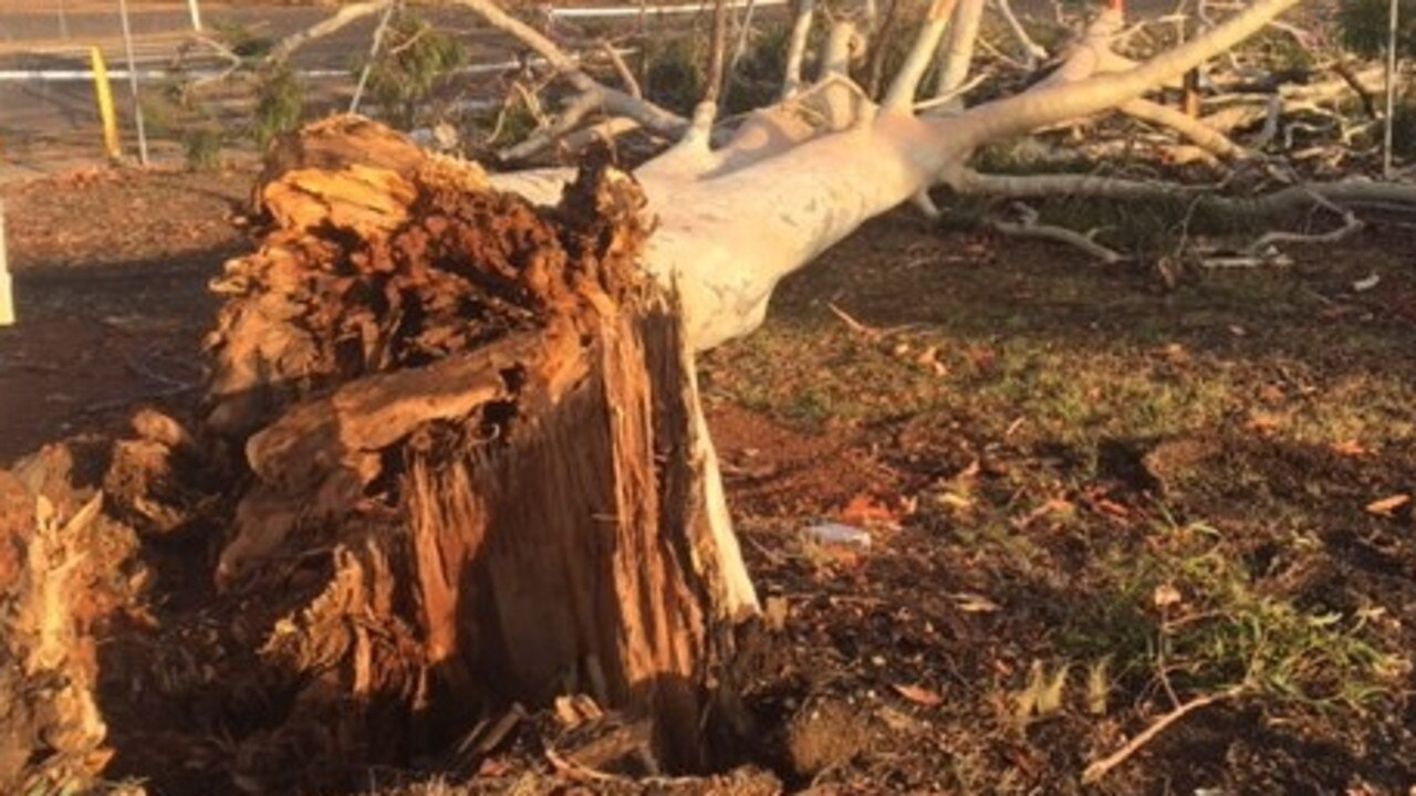 A storm downed trees in Duaringa on Thursday night.
