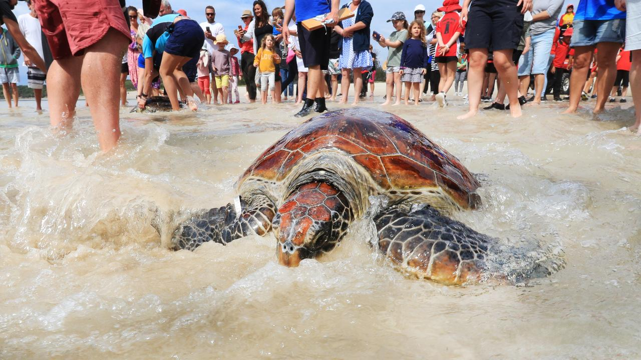KEEPING WATCH: The NSW TurtleWatch program will be hosting a free community information session on December 21. Photo: Scott Powick.