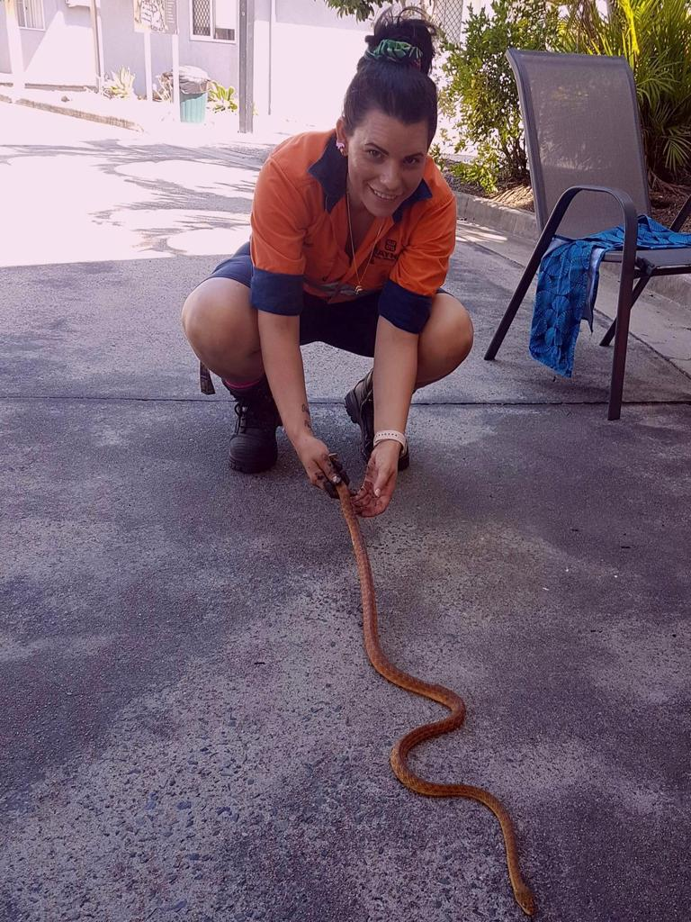 Andergrove snake catcher Mel Ellul releases a brown tree snake after it was captured at Illawong Beach Resort.