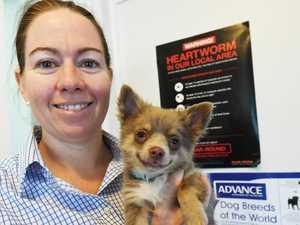 CQ vet's dire warning to stop disease epidemic