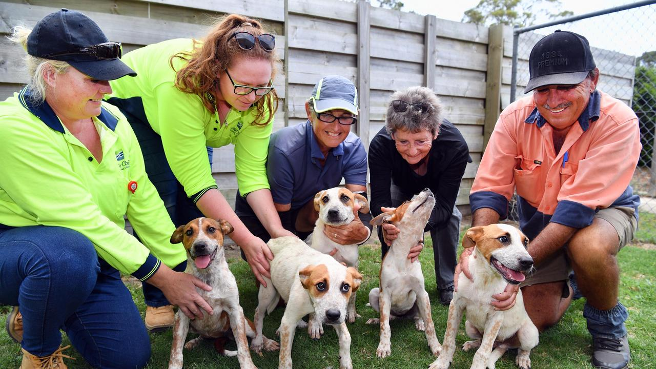 Animal facility officers (L) Pam Cairns and Kim Shorten with Fraser Coast Pound & Adoption Centre volunteers Sue Way, June Ayre and Shane Hart with the 5 puppies that were dumped in a sack beside the highway.Photo: Alistair Brightman