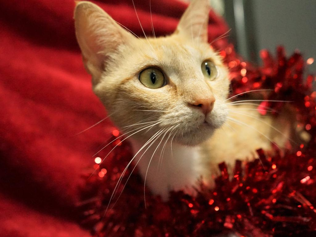 Christine is available for adoption at Mackay RSPCA. Picture: Rainee Shepperson