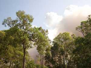 Bush inferno's rapid speed stuns residents
