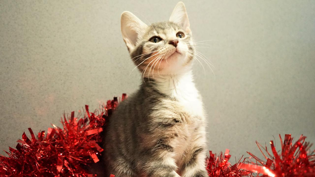 Lagoon is up for adoption at Mackay RSPCA. Picture: Rainee Shepperson.