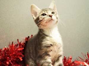The 12 strays of Christmas looking for a home