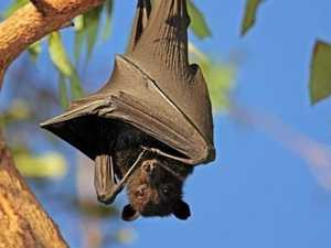 Residents warned to avoid handling bats