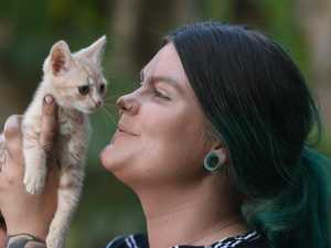 Woman on a mission to save abandoned kittens