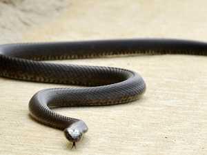 Boy, 15, hospitalised after snake bite
