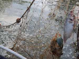 Alarming number of illegal nets found in region's waterways