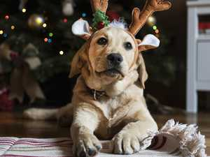 Gifts to avoid if you don't want to kill your pet