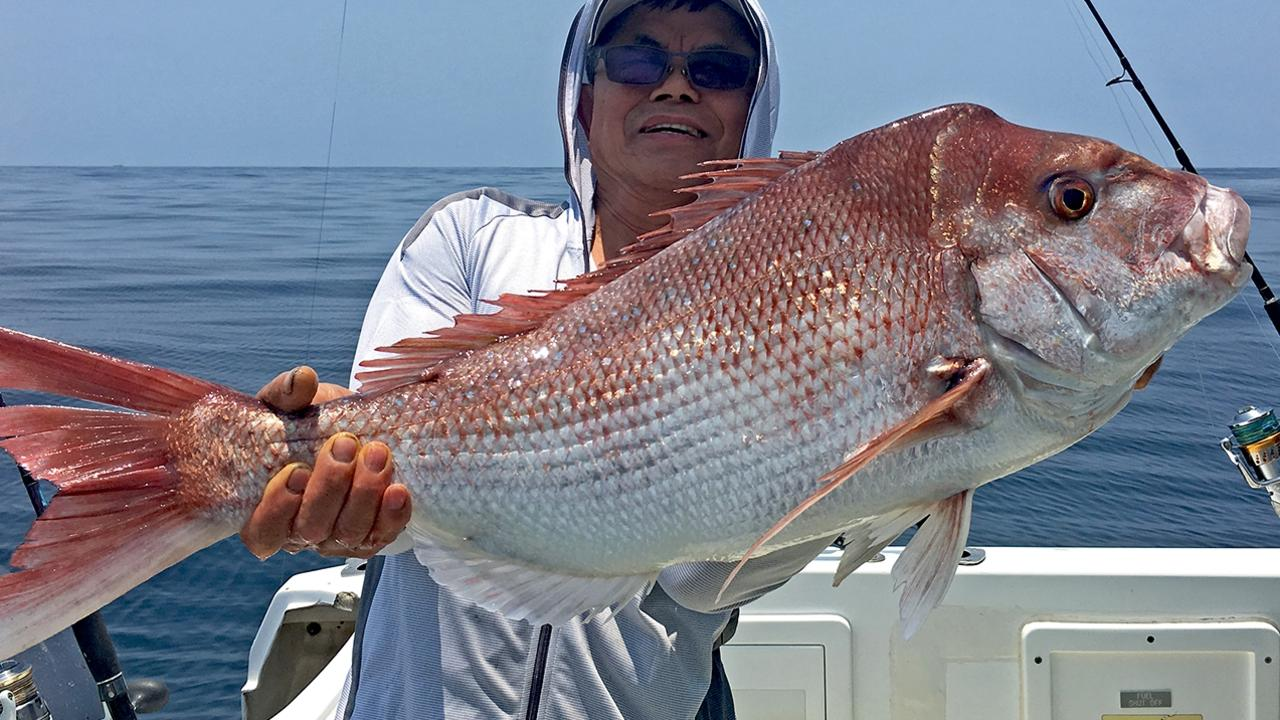 GOTCHA - Snapper and scarlet sea perch were the standouts on a recent Cougar One charter to Double Island Point. Photo: www.fishingnoosa.com.au