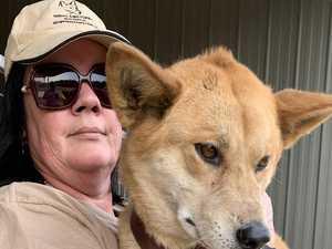 Daring dingo rescue as fires rip through sanctuary
