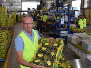 Pineapple industry faces a challenging Summer