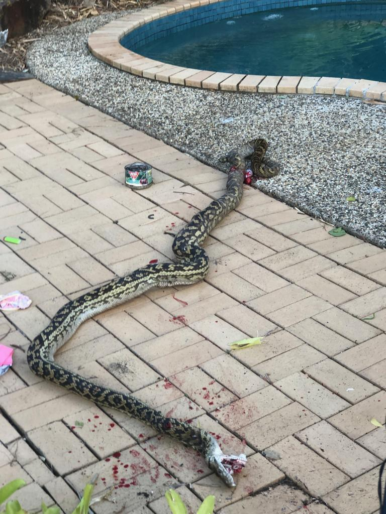 Evan Thompson finally killed the snake with a sledgehammer after it attacked his son. Picture: Evan Thompson