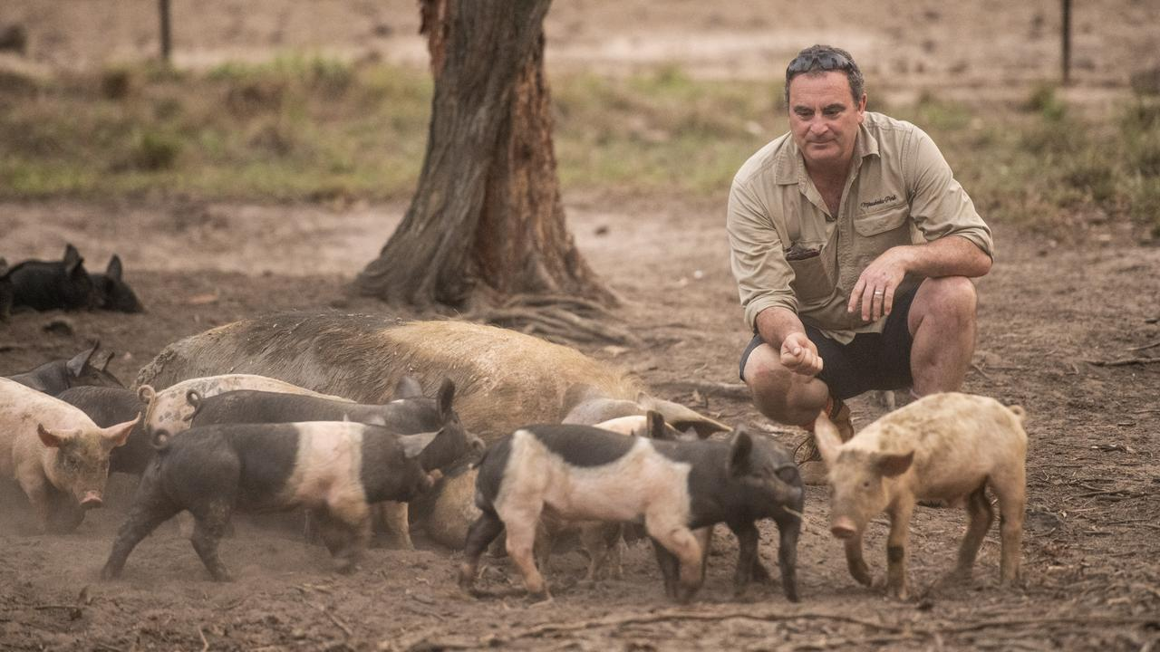 Scott Graham with some of his pigs at Mirrabooka Pork farm near Tullymorgan. Photo: Adam Hourigan