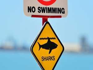 Noosa's main beach closed following shark sighting