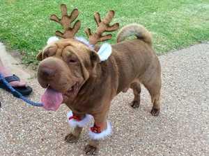 CQ's Favourite Pets Go Festive