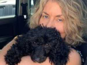 Poodle flys to Perth to be with new family for Christmas