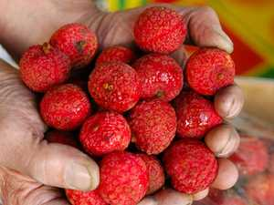 Lychee mania: Instant sellout for Mackay business