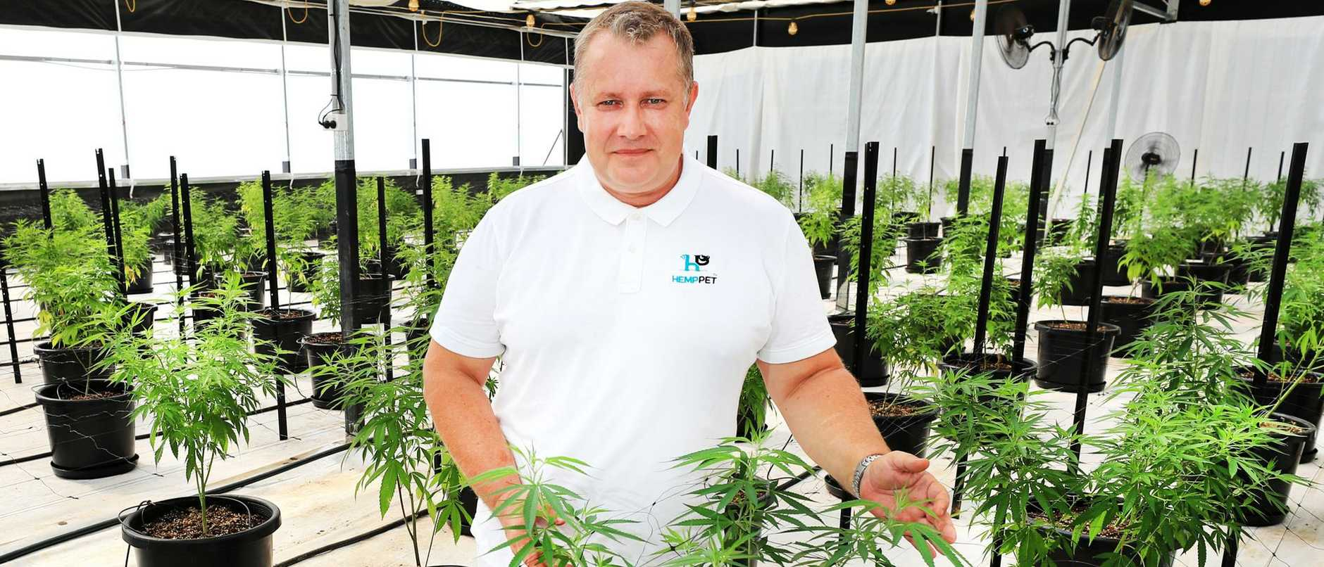 Hemp Field's co-owner ­Arthur Ways, an ex-mortgage broker, had wanted to exhibit plants from the start-up operation – just south of the city's Queensland/NSW border – at the Hemp Health and Innovation Expo in October.