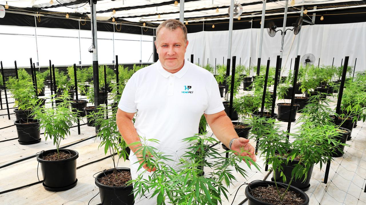 Hemp Fields managing director Arthur Ways at the company's low-THC hemp plant farm in NSW, just south of the Queensland border. Picture: Scott Powick