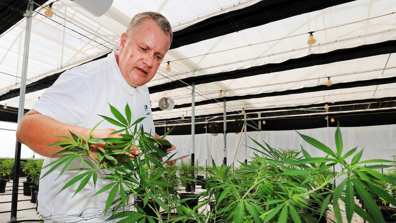 Hemp Fields managing director Arthur Ways tending to the plants. Picture: Scott Powick