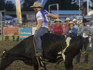 SADDLE UP: Bull riding bucks ready to take their chance