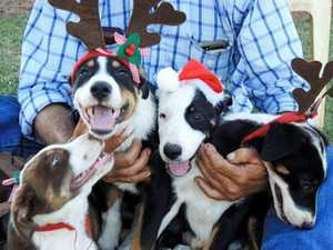 FESTIVE: 40+ photos of pets at Christmas