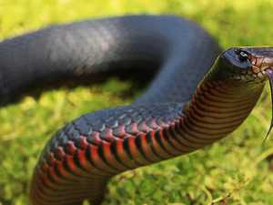 Venomous snake's genius disguise