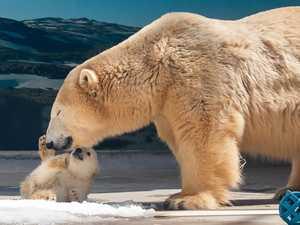 'Much loved' Coast polar bear dies